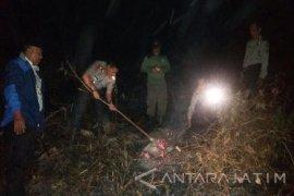 Kebakaran Lahan Pertanian di Taman Nasional Meru Betiri Dipadamkan