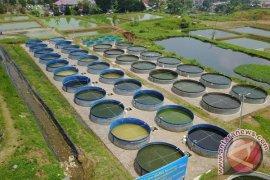 BBPBAT Sukabumi Kembangkan Budidaya Ikan Dengan Bioflok