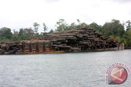 Mulai tahun depan Papua Barat ekspor langsung kayu merbau