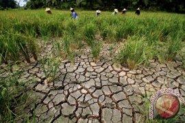Kabupaten Bekasi Siaga Darurat Kekeringan