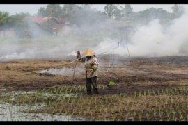 Kubu Raya terus berinovasi tingkatkan produktivitas pertanian