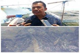Kabupaten Situbondo Jadi Poros Produksi Ikan Kerapu di Indonesia (Video)