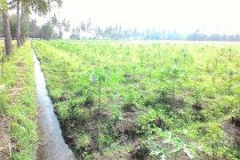Perusda Perkebunan Banongan Situbondo Kembangkan Agrowisata