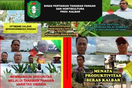 Daftar Siaran Features Dinas Pertanian Tanaman Pangan dan Hortikultura Kalbar