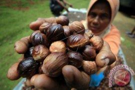 Komoditas Pala Aceh Anjlok