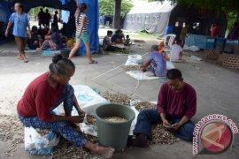 Pengungsi Gunung Agung Jadi Buruh Kupas Kacang