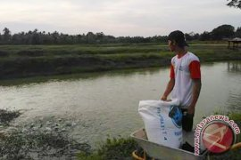 Patin dominasi produksi ikan Kabupaten Muarojambi