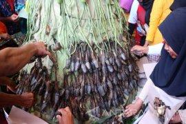 Pengembangan Ternak Lele di Bojonegoro Masih Terbuka (Video)