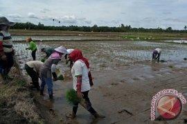 Mukomuko terima bantuan ratusan alat mesin pertanian