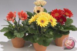 Peminat Bunga Hidup Gorontalo Semakin Minim