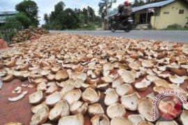 Harga kopra di Ambon bergerak turun