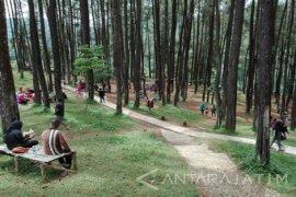 Tingkatkan Pengunjung, Pengelola Hutan Wisata Nongko Ijo Madiun Berbenah