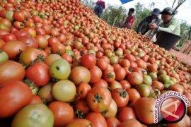 Konsumsi Apel dan Tomat Bantu Perbaiki Paru-Paru Perokok