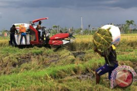 Stok beras di Banyuwangi masih aman