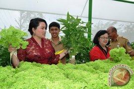 Dinas Pertanian Badung panen sayuran hidroponik di Petang