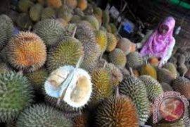 Durian lokal masih dominasi