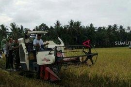 Petani Langkat panen raya padi