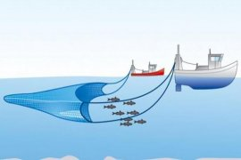 Nelayan Bengkulu siap razia kapal trawl