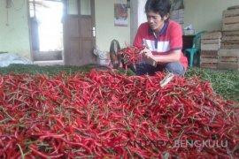 Harga cabai merah bertahan di kisaran Rp30.000