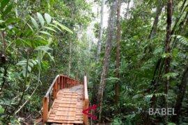 Hutan Pelawan di Namang dikunjungi pelajar dari Jakarta