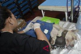 Hari Rabies, Pemkot Denpasar sosialisasikan rabies