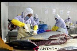 Ekspor perikanan Maluku didominasi kerapu hidup