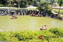 Libur Paskah, kunjungan di Bali Zoo melonjak