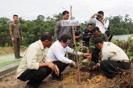 Bupati Paser tanam Pohon Ulin di Tahura