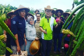 Sabisa Farm IPB menjadi trendsetter bagi perguruan tinggi di Indonesia