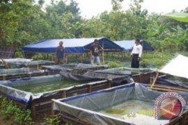 Pertamina Dumai sosialisasi Kampung Minapolitan