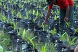 Nilai Tukar Petani Riau paling tinggi di Sumatera, begini penjelasan BPS