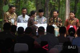 Bali Nusra potensial serap KUR petani garap lahan hutan