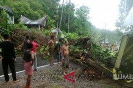 Pohon tumbang timpa rumah warga di Kolang