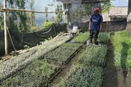 Desa Ngadisari Probolinggo Disiapkan Sebagai Desa Wisata Edelweis