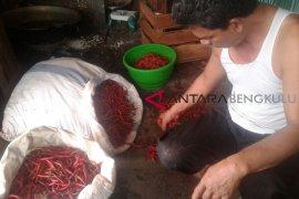 Harga cabai merah turun Rp5.000