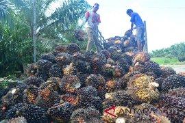 Indonesia terus promosikan industri sawit berkelanjutan ke Eropa