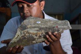 Perhutani Bawa Temuan Fosil Ngawi ke Madiun