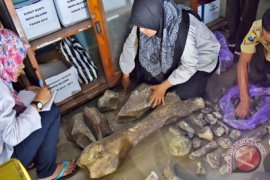 Penemuan fosil gajah purba Ngawi