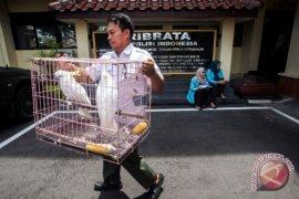 Pengungkapan Kasus Perdagangan Satwa Dilindungi