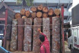 KLHK tahan enam sopir kayu ilegal