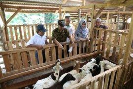 IPB ajak perusahaan kunjungi SLAK penggemukkan domba di Desa Nambo