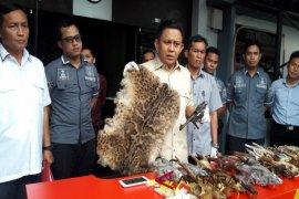 Polda Kalsel Ungkap Perdagangan Awetan Satwa Dilindungi