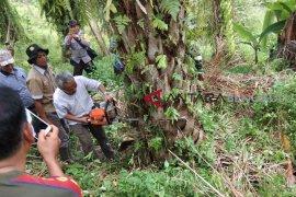 Pemusnahan ratusan hektare sawit di Mukomuko bertahap