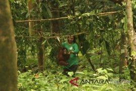 Four Paws gandeng Jejak Pulang buka Sekolah Orangutan di Samboja