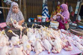 Tradisi masak opor dongkrak harga ayam di Pekanbaru