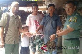 BKSDA Jambi amankan kucing hutan peliharaan warga