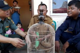 Warga Jambi serahkan kukang kepada petugas BKSDA