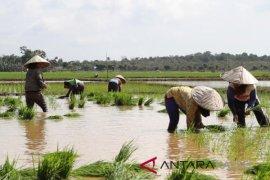 Dinas Tanaman Pangan siap cetak 1.700 hektare lahan sawah