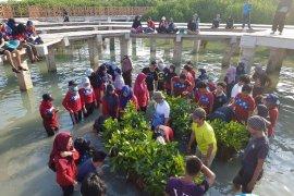 Mahasiswa MSP IPB tanam 1.000 mangrove di Pulau Pramuka