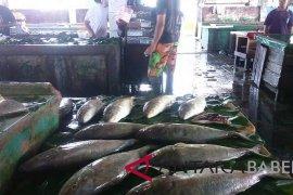 Ikan tangkapan nelayan Sungailiat 231.428 kilogram